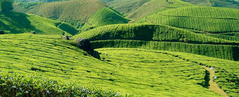 Ultimate Guide : Places To Visit In Ooty