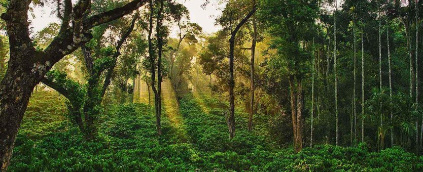 JUNGLE RESORTS IN COORG