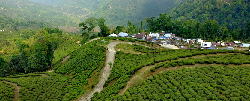 The Most Luxurious Villas in Darjeeling